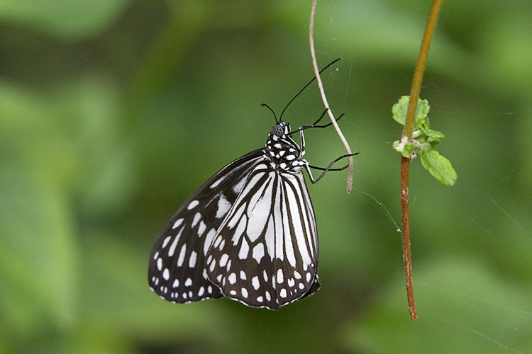 IMAGE: http://www.itsanadventure.com/postimages/butterfly1.jpg