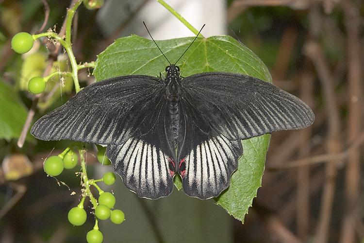 IMAGE: http://www.itsanadventure.com/postimages/butterfly3.jpg