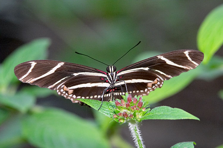 IMAGE: http://www.itsanadventure.com/postimages/butterfly4.jpg