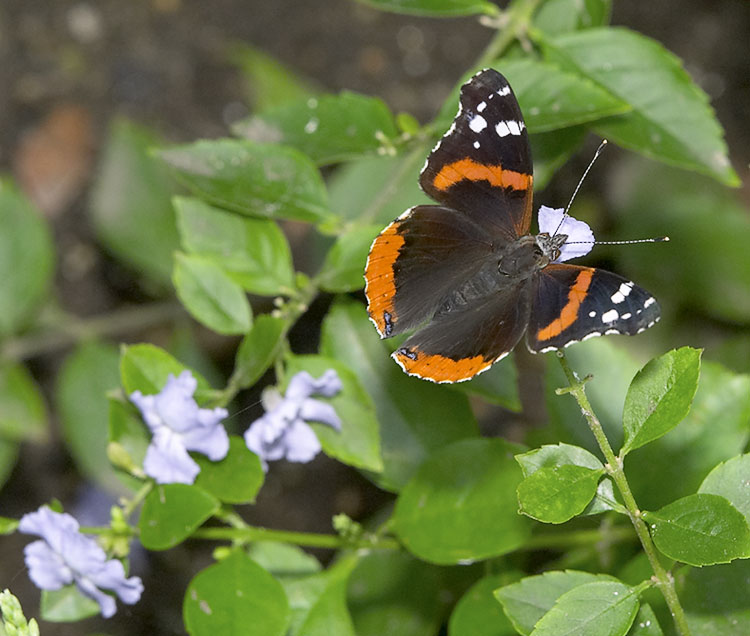 IMAGE: http://www.itsanadventure.com/postimages/butterfly5.jpg