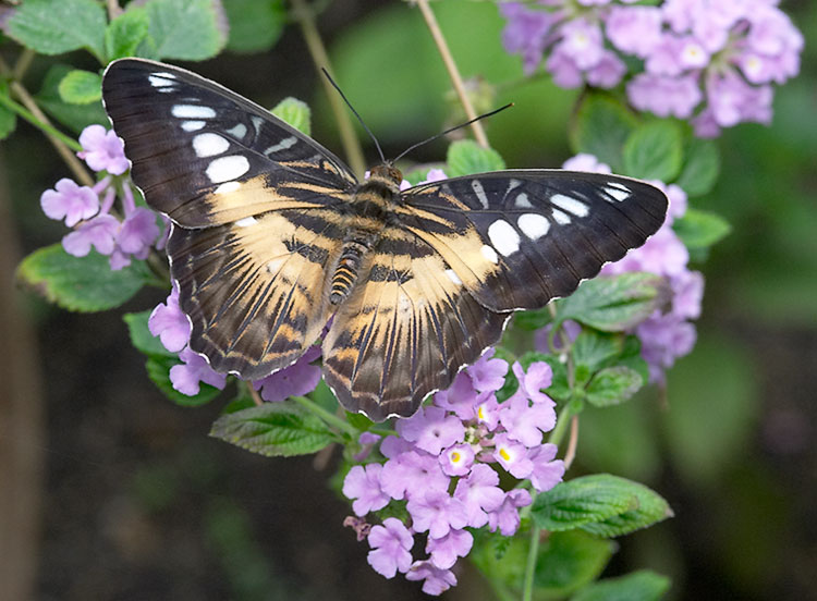 IMAGE: http://www.itsanadventure.com/postimages/butterfly6.jpg